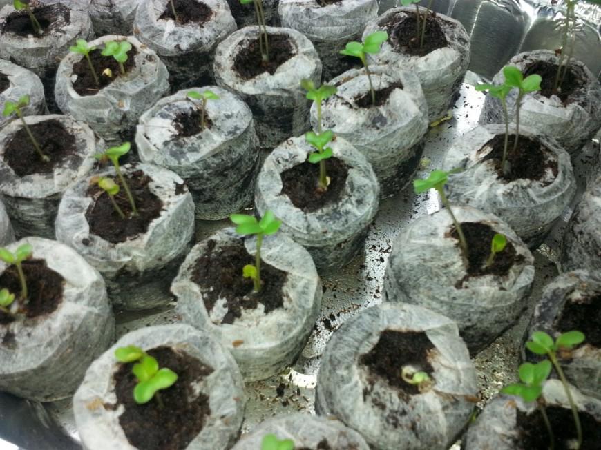 Seedlings!