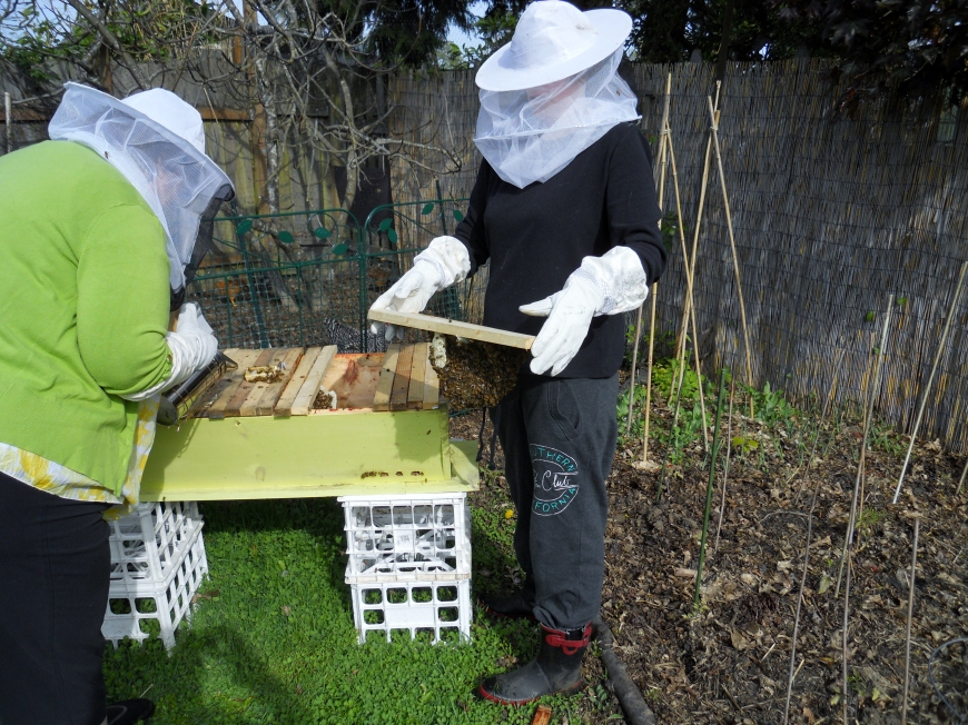 New Bees in the Hood